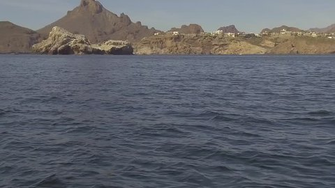 Slow motion gimbaled footage of rare dolphins in Sea of Cortez