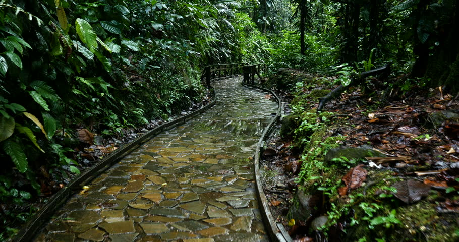 Walking in a wet forest on a stone path with water reflection, scenic natural outdoor green nature environment. fresh rainforest empty landscape hiking road. peaceful natural walk. | Shutterstock HD Video #1024464749