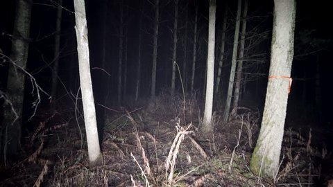Steady shot walking at night through woods. Running thorough misty deep forest at night. Scared running away from monsters and death, lost and alone in the dark. Spooky trees and fog in darkness.