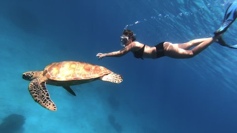 Sea Turtle and Woman Swimming Together Slow Motion.