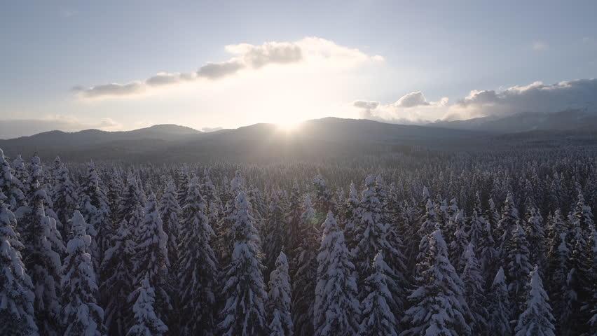 Aerial - Reveal shot of vast spruce forest landscape at sunset | Shutterstock HD Video #1024936469
