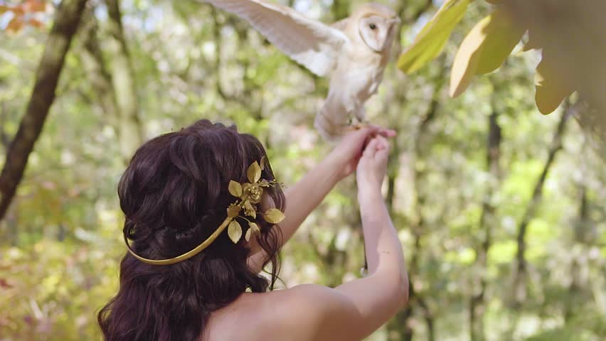 Beautiful model shows beautiful delightful hairstyle for long dark hair in Greek style with golden wreaths, girl with no face, lady catches on hands cute little post owl with big black eyes | Shutterstock HD Video #1025051939