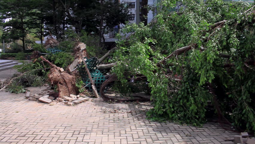 September 19, 2018, after the typhoon Mangkhut in Hong Kong, big tree collapse on the garden by strong wind, nearby garden and public housing, Domino effect. | Shutterstock HD Video #1025727269