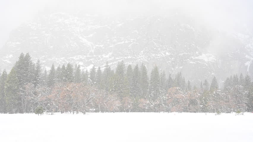 Heavy Snow Fall in Yosemite Valley during winter storm