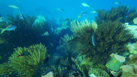 coral reef, the underwater world of the Atlantic Ocean, beautiful fish