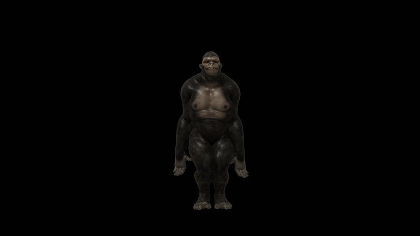 Gorilla Funny Hip Hop Street Dance 2 ,Realistic 3D Gorillas funny Hip-Hop dancing -VJ show, party, music clip, ringtone, website, screen saver, dvd menu, Full HD PNG+Alpha transparent background