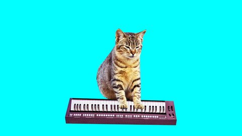 Animation minimal gif art. Kitty plays on synthesizer
