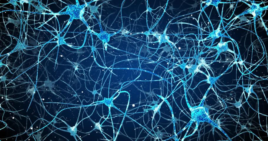 Neurons in the head - flight, neuroactivity, synapses, Neurotransmitters, brain, axons