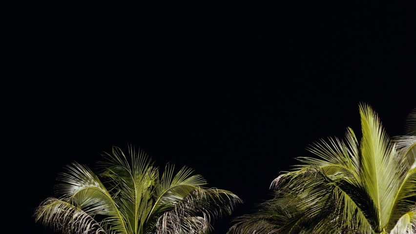 Looking Up at coconut Palm Trees against Dark night Sky. Amazing backgound or backdrop with copy space. Silhouette of illuminated palm tree on dark. Copy space.