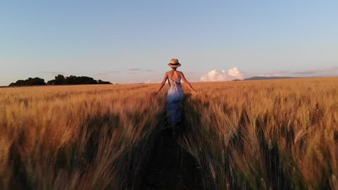 Rear view of young carefree woman in dress walking in slow motion through field touching with hand wheat ears,female tourist enjoying freedom and calmness on rural nature in summer. Vacations holidays