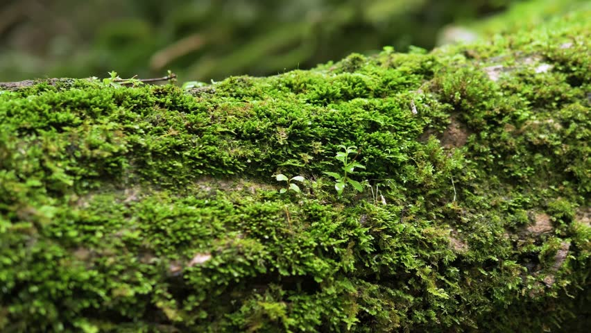 Moss Growing on Fallen Tree | Shutterstock HD Video #1026902879