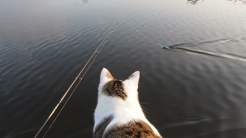 The cat fishing on the inflatable boat on the river. A playful cat in an inflatable kayak rests together with its the owners in the summer on the river. Funny cat hunts fish bait. Leisure with pets in | Shutterstock HD Video #1026968129