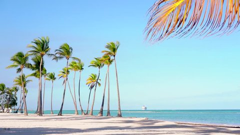 Palm trees standing in a row against a blue ocean. Beautiful Dominican beach/Isolated palm trees on the beach. Best beaches of Punta Cana. Amazing palm leaf. Palms beach background. Summer and travel