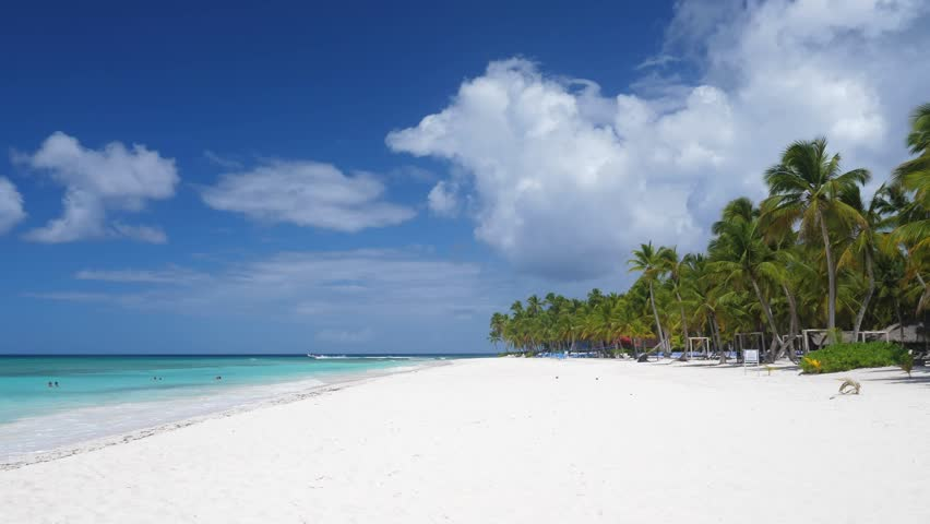 Coconut palm trees on sandy beach at caribbean island. Vacation summer holidays | Shutterstock HD Video #1027663829