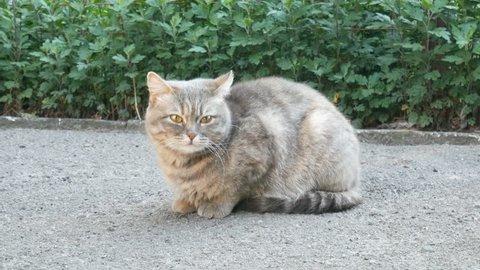 stray street cat sitting on the pavement