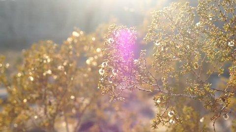 Dream like golden sunlight washing over swaying bush, Slow Motion Close Up