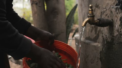 Closeup of an african small farmer woman washing vegetable with running water before cooking it in a masai village