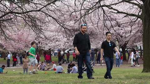 Branch Brook Park Cherry Blossom Festival 2020.Newark New Jersey April 14 2019 Branch Brook Park During The Peak Of The Cherry Blossoms Festival