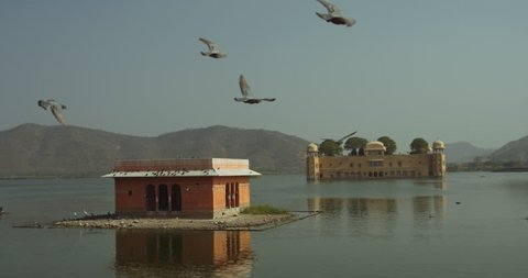 Birds flying over Jal Mahal in Jaipur, India.