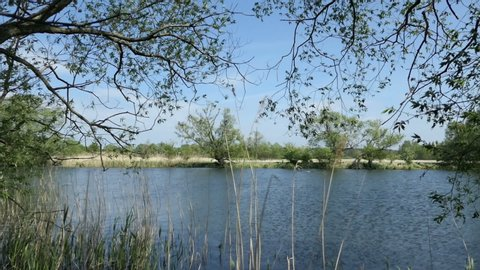 Havel river landscape in Springtime. Willow trees on shore. Havelland region in Germany.