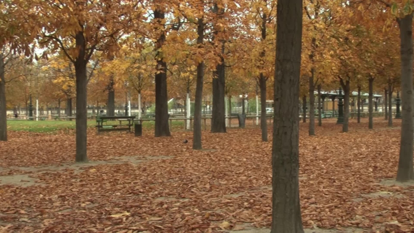 Panning shot of colorful autumn trees at Tuileries Garden in Paris, France | Shutterstock HD Video #1029829469