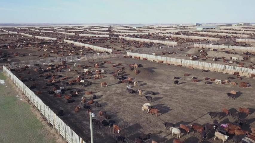 Cattle pens in a large feedlot | Shutterstock HD Video #1029873149