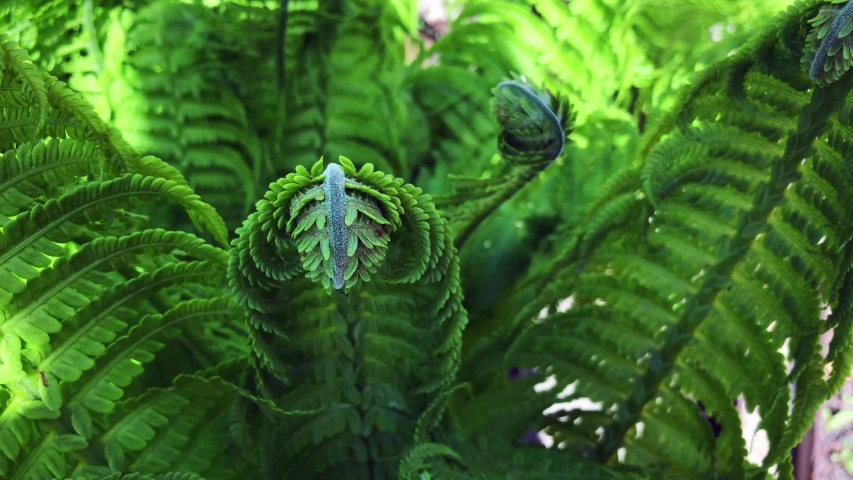 Green leaves fern tropical rainforest foliage plant swaying in the wind