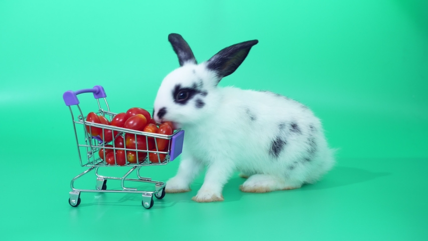 Black and white adorable baby rabbit on green screen.  Cute baby rabbit eating tomatoes in Shopping cart   | Shutterstock HD Video #1030178189