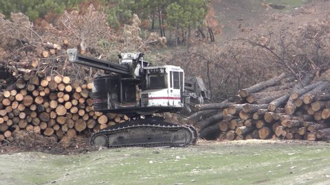 Salvage Timber Stock Video Footage - 4K and HD Video Clips