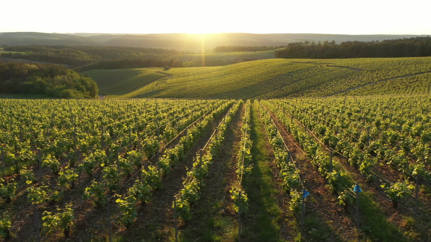 France, Champagne-Ardennes, Aerial view of Champagne vineyards, Aube department, Les Riceys, listed as World Heritage by UNESCO | Shutterstock HD Video #1030690349