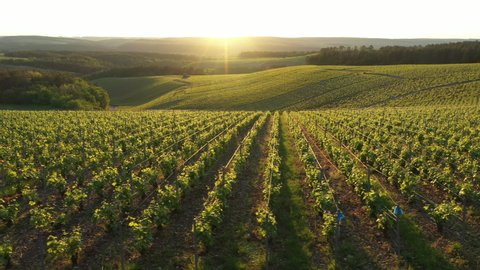 France, Champagne-Ardennes, Aerial view of Champagne vineyards, Aube department, Les Riceys, listed as World Heritage by UNESCO