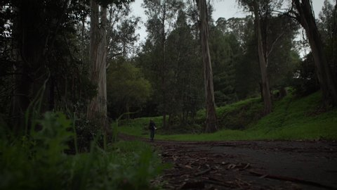 Professional photographer walking through a dark, moody forest taking pictures. Shot on a Canon C200 in 4K in San Francisco in 2019.