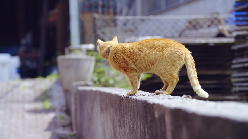 Cats watching the neighborhood 4K | Shutterstock HD Video #1031108579