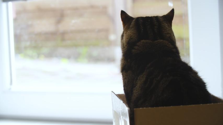 Cat in the box looking outside 4K | Shutterstock HD Video #1031108609