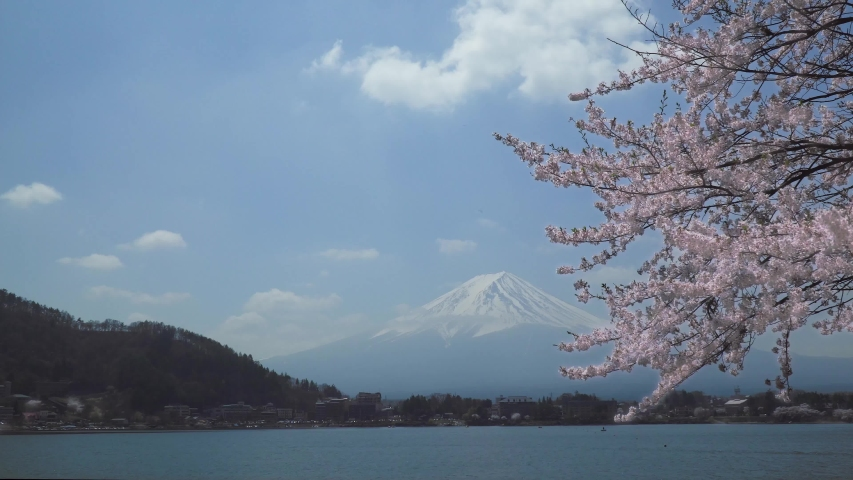 Mt. Fuji and Cherry blossoms are falling. spring landscape looking over the lake Kawaguchi at Yamanashi pref in Japan.    Shutterstock HD Video #1032182279