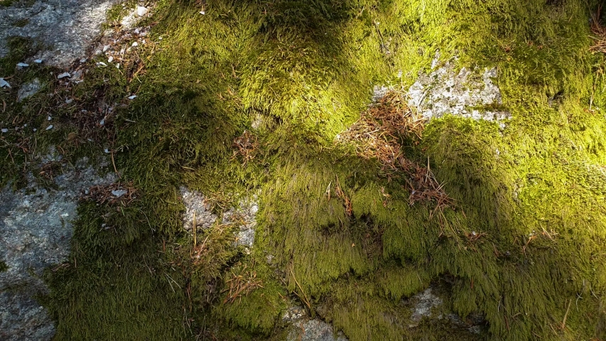 Beautiful close up view of stone overgrown with green moss. Beautiful nature backgrounds. | Shutterstock HD Video #1033253699