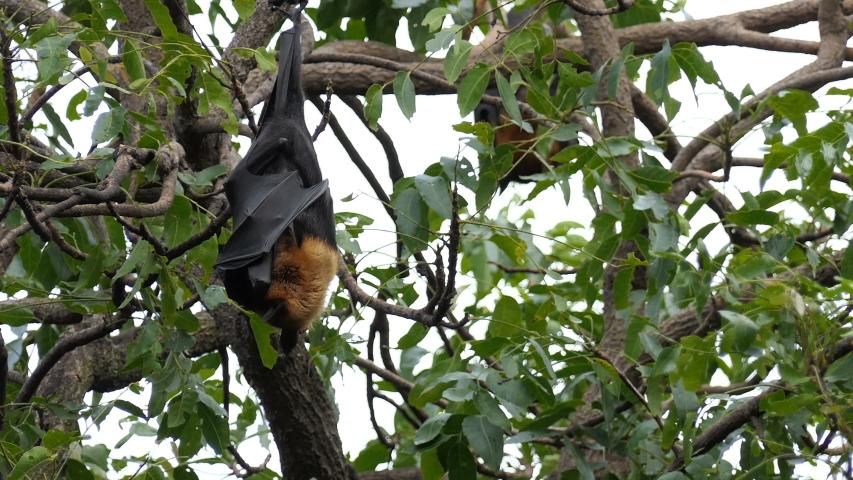 Midget hanging on tree — img 7