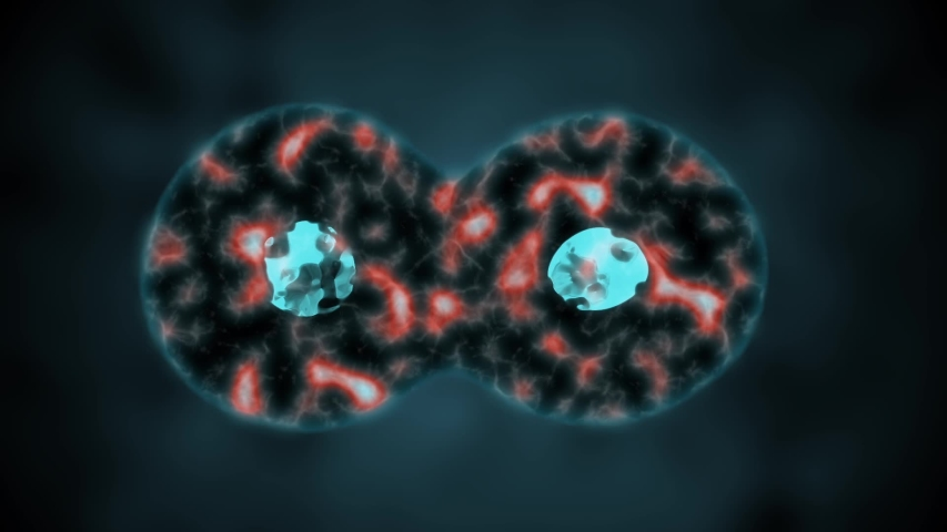 Binary fission cells division motion graphic | Shutterstock HD Video #1034687069