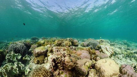 360 panorama: Beautiful underwater world with coral reef and tropical fishes. Camiguin, Philippines. Travel vacation concept