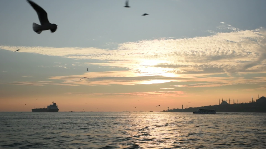 Flight Of The Seagulls with Istanbul Landscape at Sunset