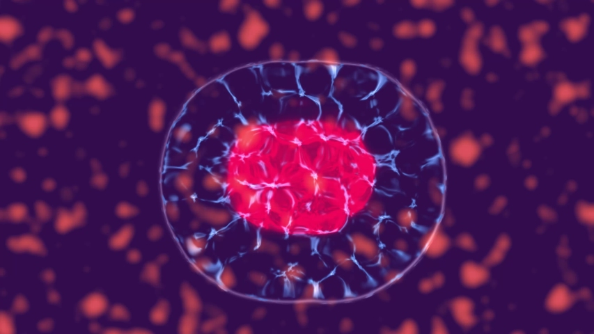 Cellular division under the microscope, stem cells dividing inside body fluid. 3D animation of dynamic cell division | Shutterstock HD Video #1036091699