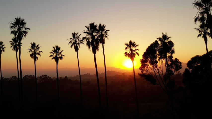 Aerial shot of a row of palm trees at Sunset | Shutterstock HD Video #1036352639