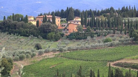 Florence, Tuscany, Italy. Landscape of the Chianti hills with vineyard cultivation. Cultivation of vines and olive trees near Florence.