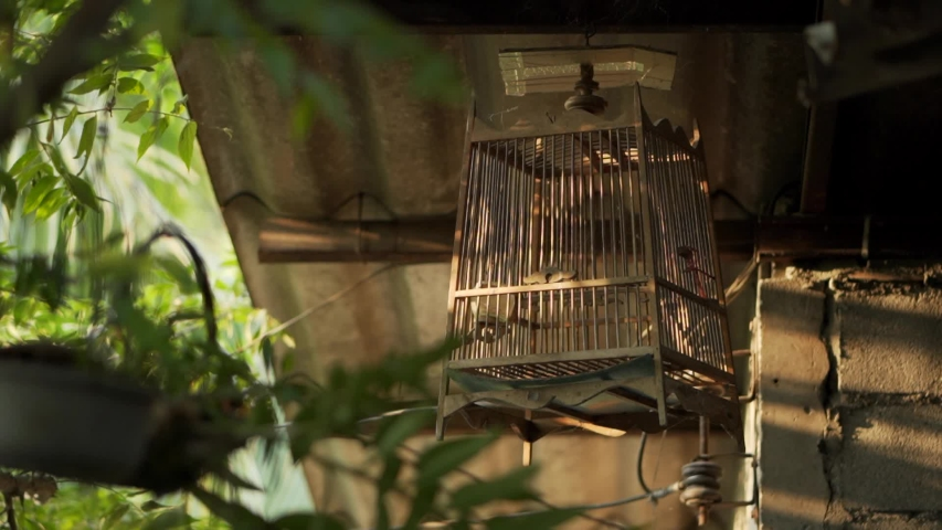An empty Bird Cage in the morning. | Shutterstock HD Video #1037203499