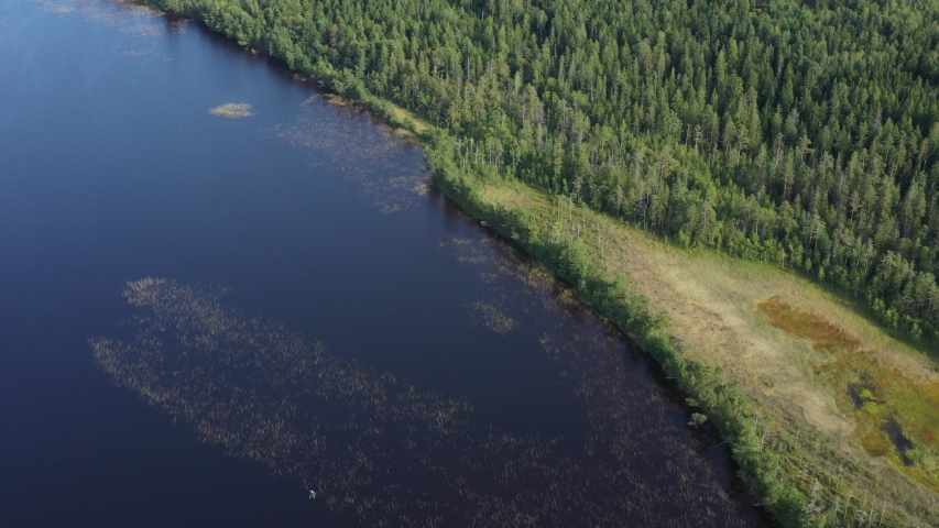 Aerial view from drone on summer forest and lake. Wild nature | Shutterstock HD Video #1037327249