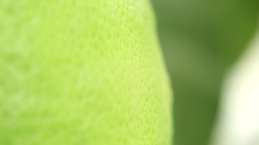 Green peel of lemon, mandarin, lime closeup. The texture of the peel of citrus. Macro. | Shutterstock HD Video #1037794889
