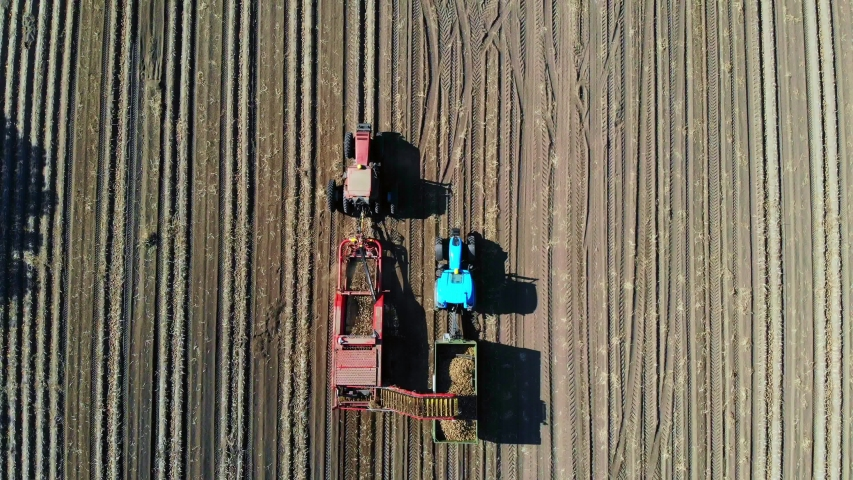 Top view, aero. Useing machinery at farm field during potatoe harvesting . Potatoe picking machine digs and picks potatoes, unloading crop into back of truck. warm autumn day | Shutterstock HD Video #1038773879