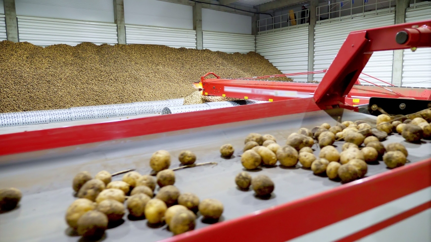 Close-up, Potatoes move on special conveyor machinery belt and fit into a storage room, a warehouse for winter storage. potato harvesting, crop | Shutterstock HD Video #1038773909
