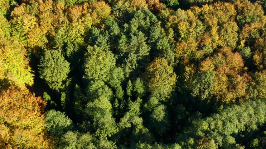 Beautifully colored trees to fall colors in the hills of aerial footage   Shutterstock HD Video #1039923959