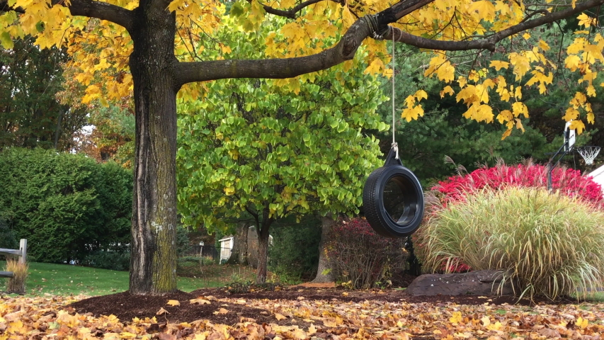 Children's tire swing in autumn hanging from a tree with colorful foliage, yellow, red, green, orange, foliage with a tire swing with a old rope and old tire in fall. children's swing in the fall.  | Shutterstock HD Video #1039971029